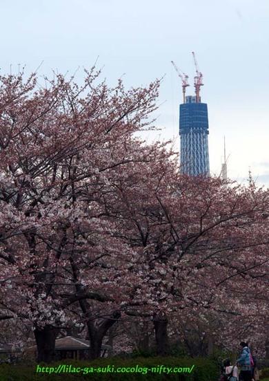 2010tree