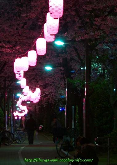 Sakura2010ryokudoyoru
