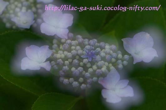 Dsc_0120_2